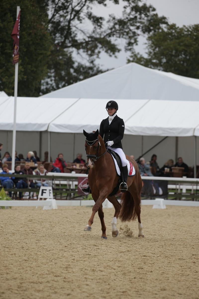 Scales Of Training Straightness Harris Equestrian